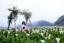 相约台湾阳明山浪漫花海