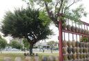 鹿港古镇瓮墙焕发光彩